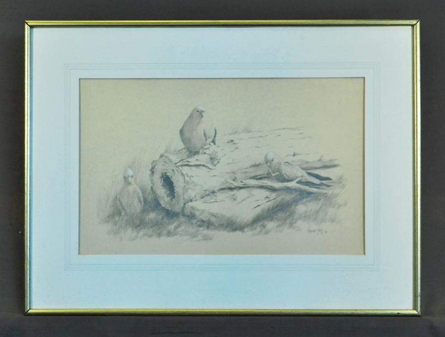 'Galahs', 1988
